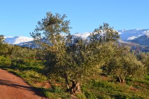 Vrijetijdspark met op achtergrond de Sierra Nevada